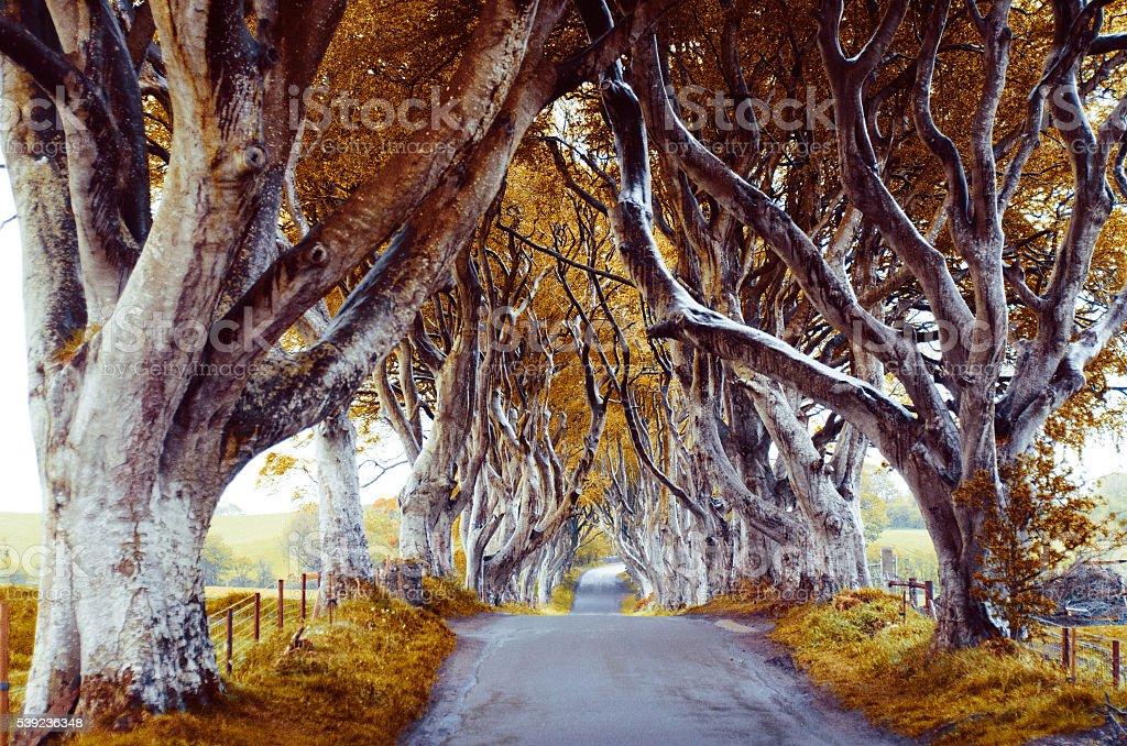 Majestuoso árbol callejón foto de stock libre de derechos