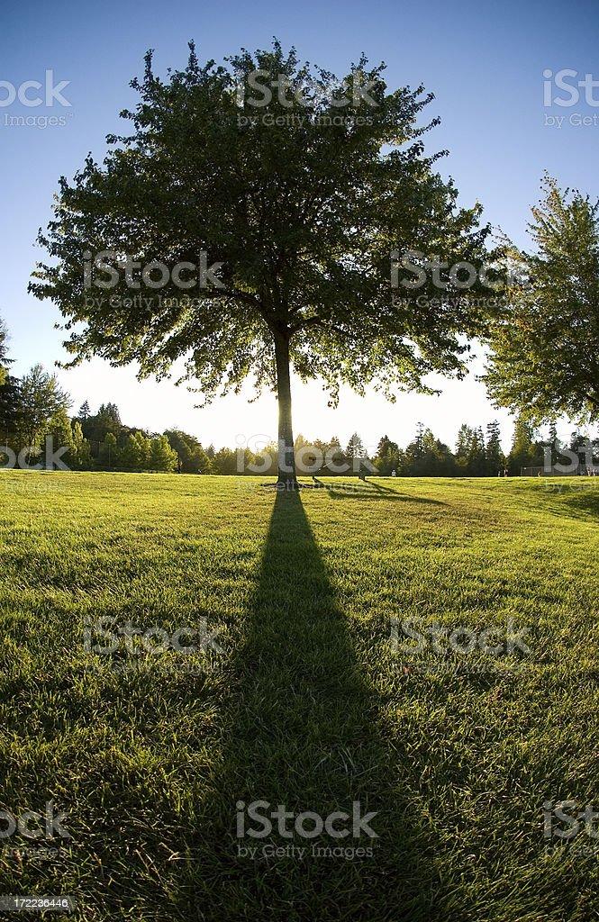 Majestic Tree at Dusk stock photo