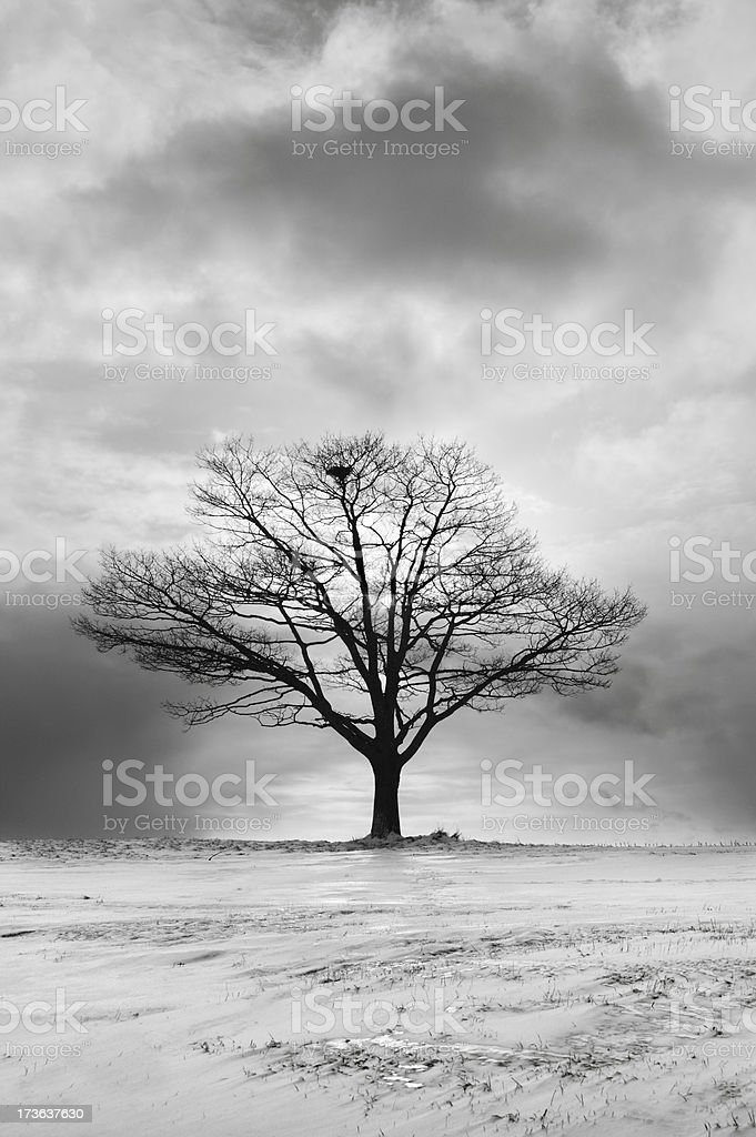 Majestic Tree royalty-free stock photo