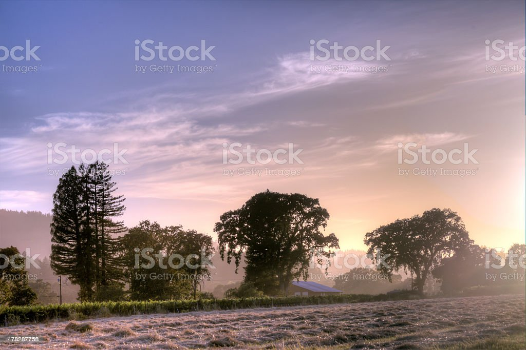 Majestic Trees Against the Sunlight stock photo