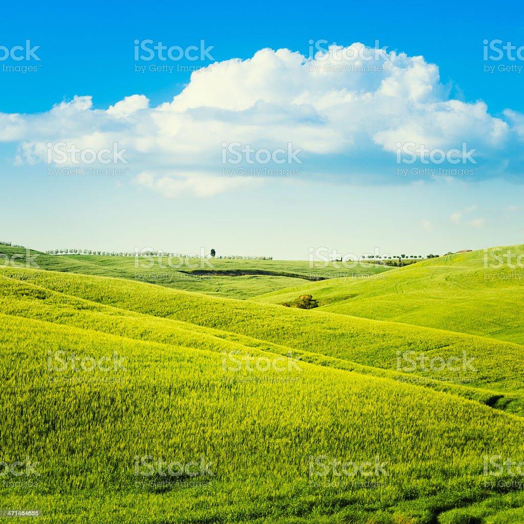 Majestic Tuscany wheat landscape at dusk royalty-free stock photo