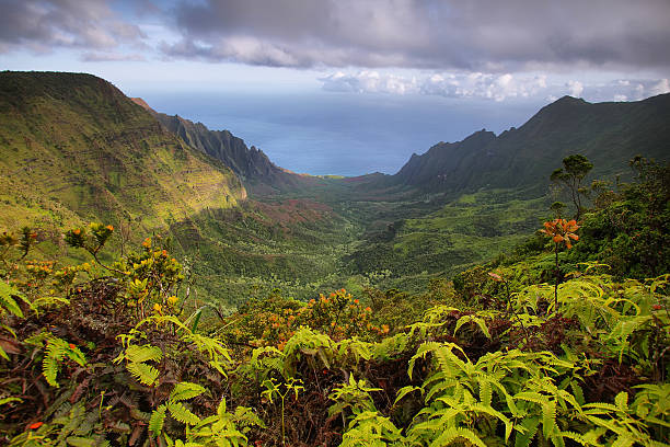 Majestic views of Napali coast from Kalalau lookout stock photo