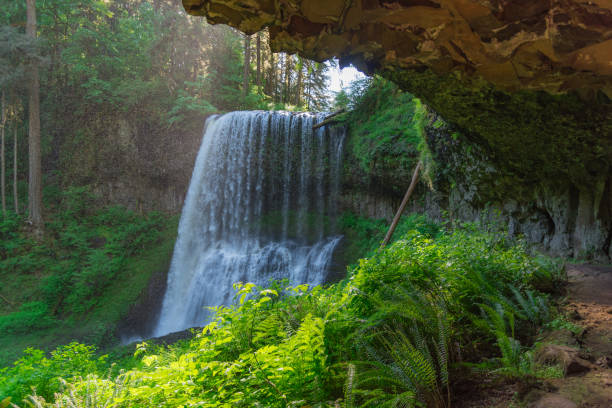 Majestic waterfall surrounded by lush foliage from inside a cave in Oregon stock photo