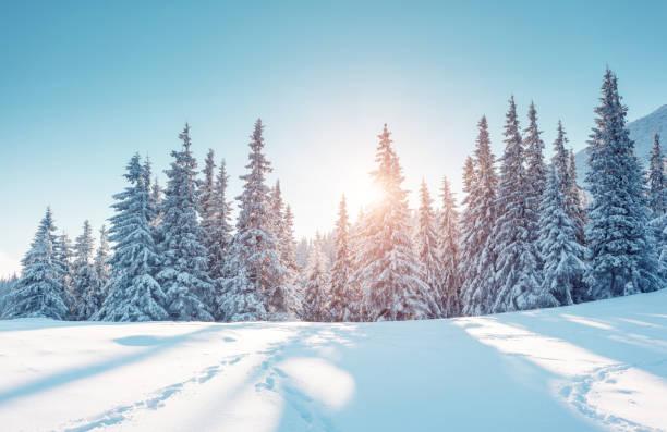 Majestic winter landscape. Location Carpathian mountains, Ukraine, Europe.
