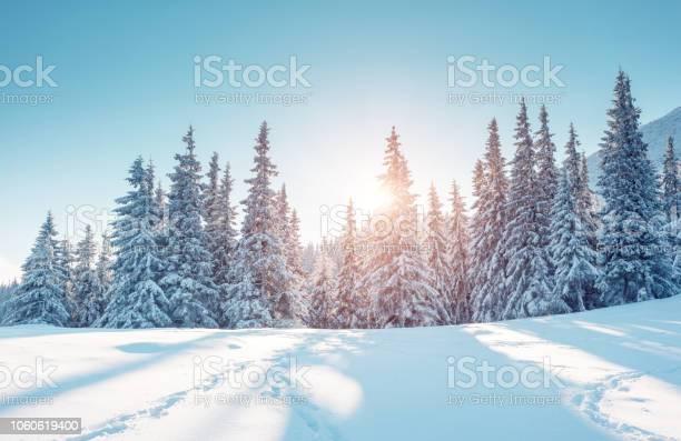 Photo of Majestic winter landscape. Location Carpathian mountains, Ukraine, Europe.