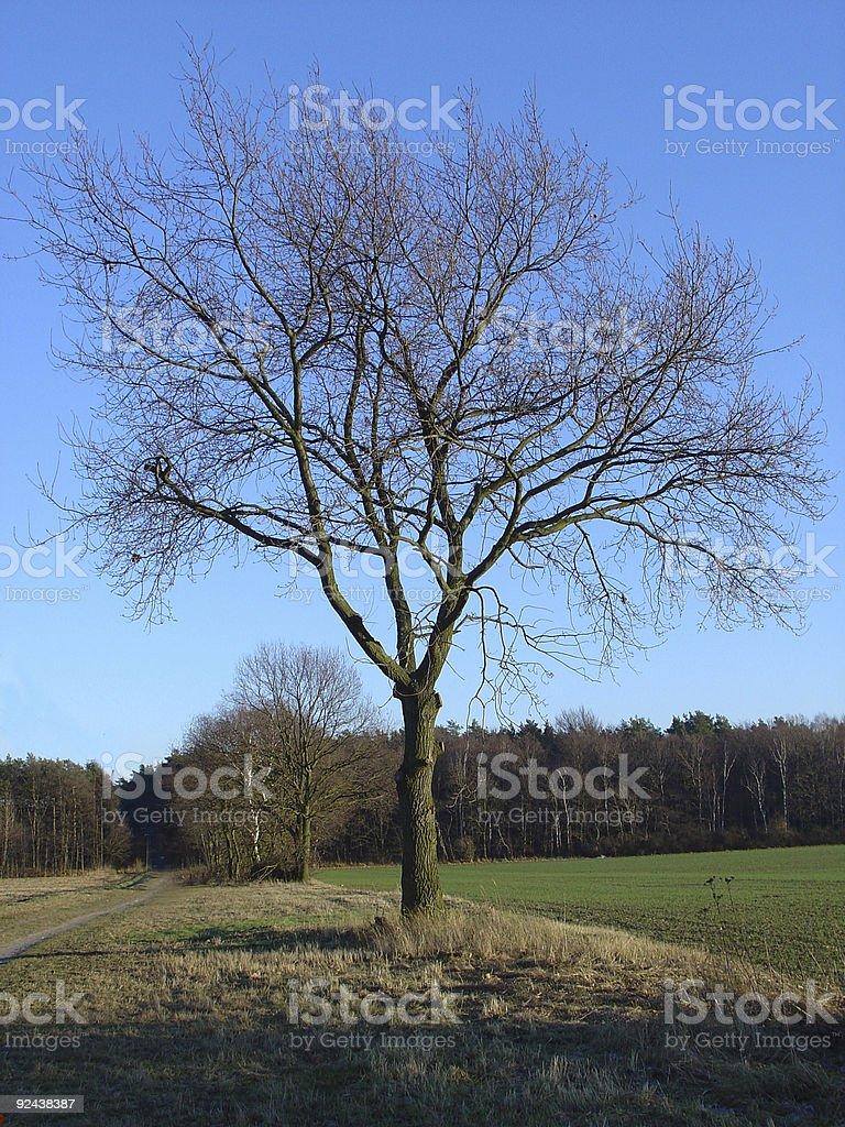 majestic winter tree royalty-free stock photo