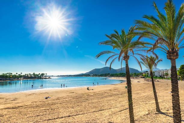 mallorca island, sand stranden platja de alcudia med palmer, spanien medelhavet - spain solar bildbanksfoton och bilder
