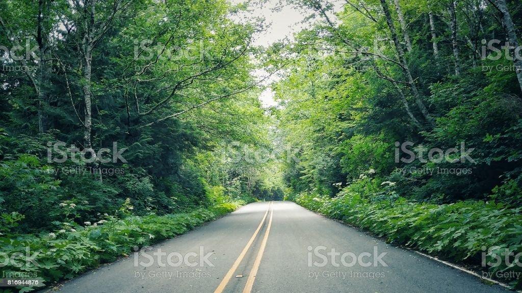 Makah Forest Canopy over Road, Cape Flattery, Washington stock photo