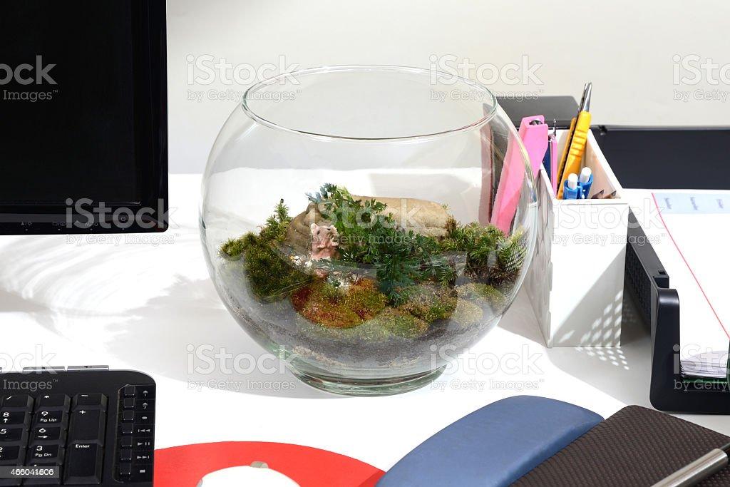 Make green with terrarium. stock photo