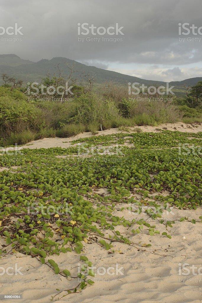 Makena Staatspark Lizenzfreies stock-foto