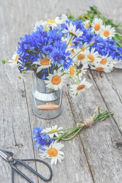 att göra en bukett vackra vilda blommor av prästkragar och blåklint på bakgrunden av den gamla trä bakgrunden. för gratulationer. kopiera utrymme - flower bouquet blue and white bildbanksfoton och bilder