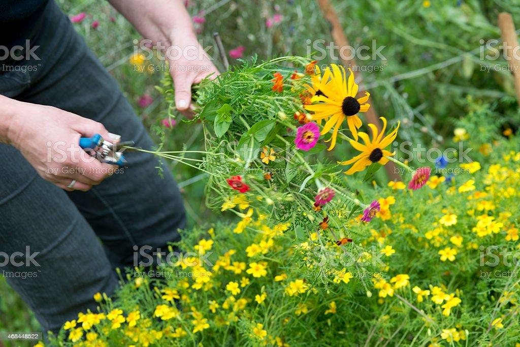 making a summer garden bouquet stock photo