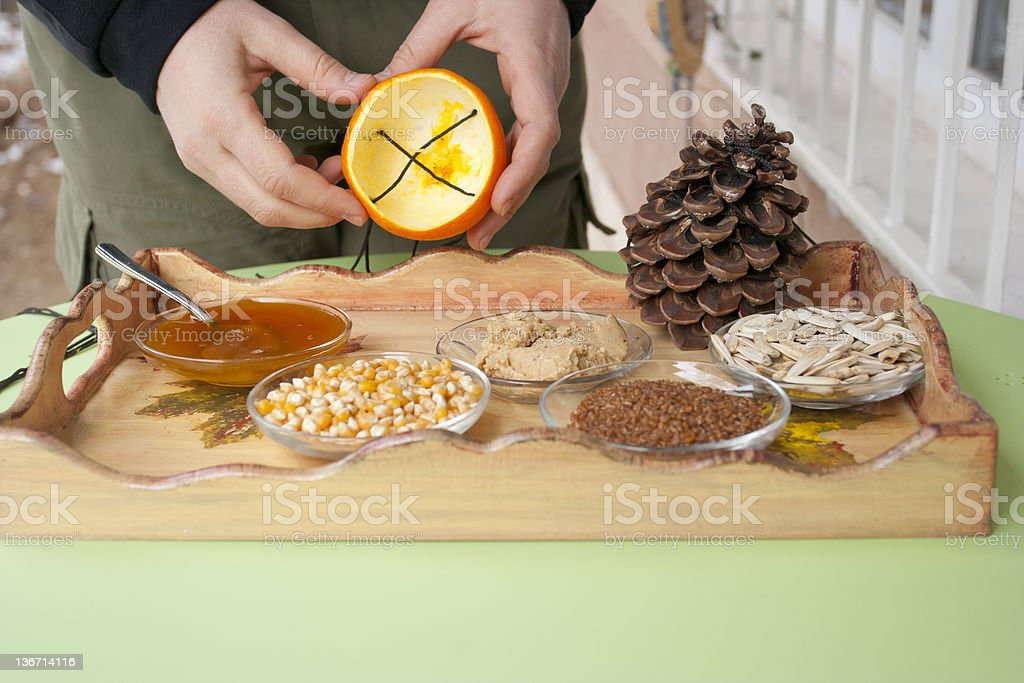 making bird feeder from orange and pine cone stock photo