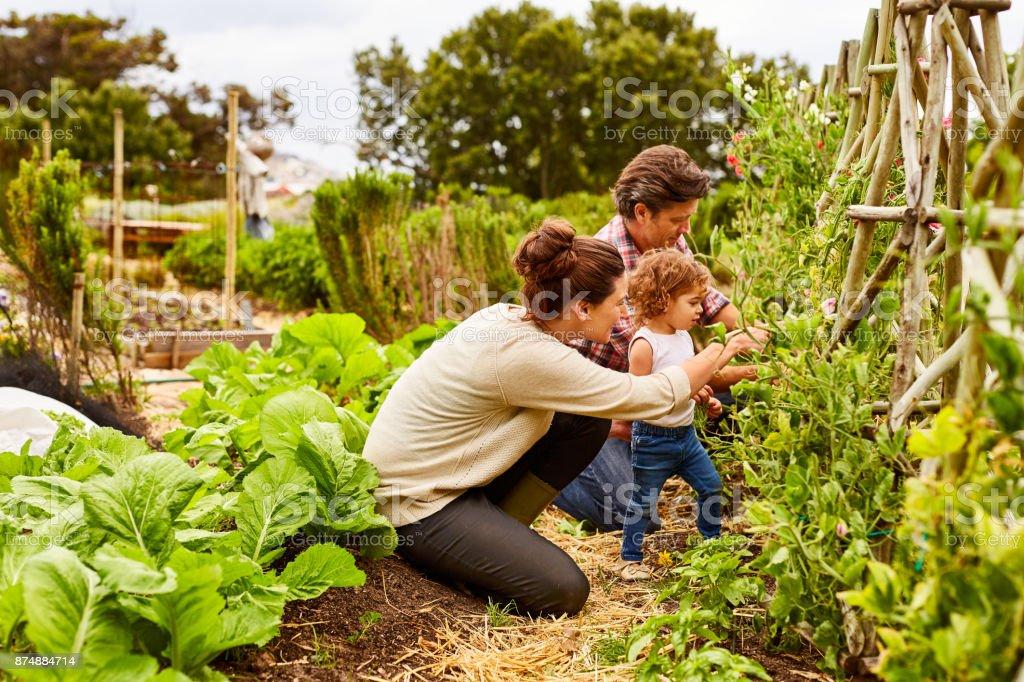 Machen Gartenarbeit eine Bindung Erfahrung – Foto