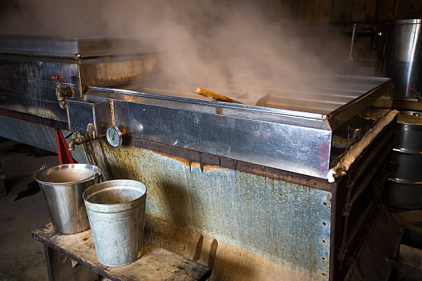 Making Maple Syrup stock photo