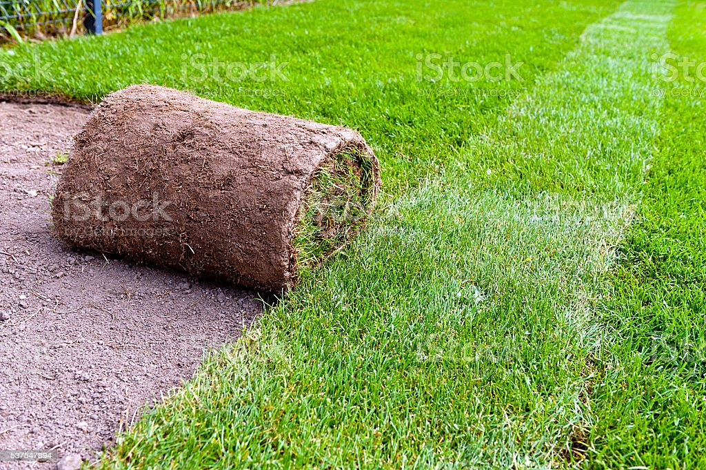 making new lawn stock photo