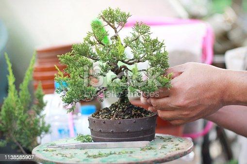 istock Making of Bonsai pruning 1138585907