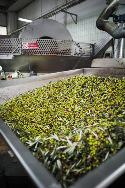 making of olive oil in puglia - defoliator stock pictures, royalty-free photos & images
