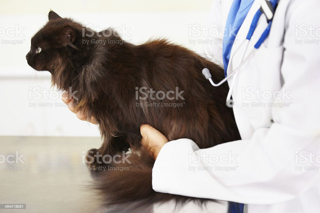 Making sure he's ok royalty-free stock photo