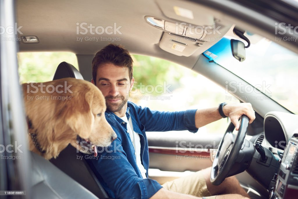 Making sure my human drives properly - Foto stock royalty-free di Adulto