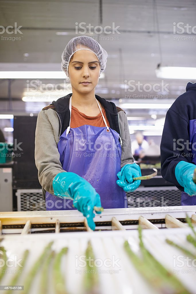 Making sure the asparagus spears meet the quality standards stock photo