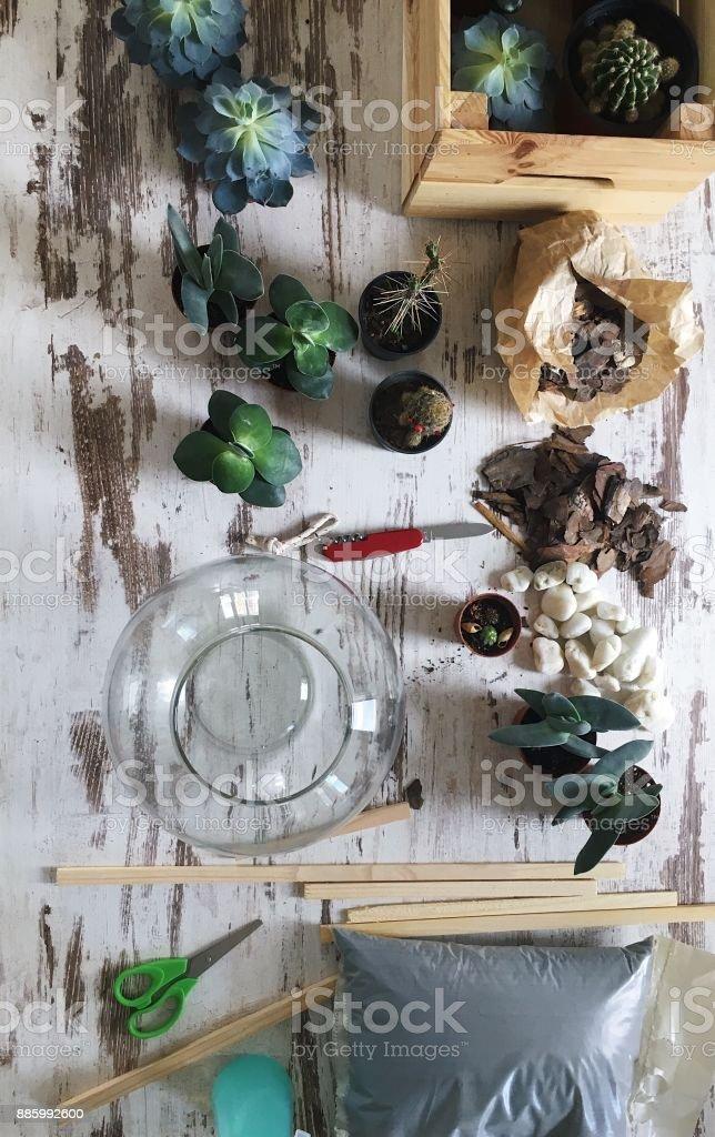 Terrarium zu Hause machen – Foto