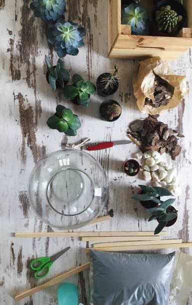 Making terrarium at home stock photo