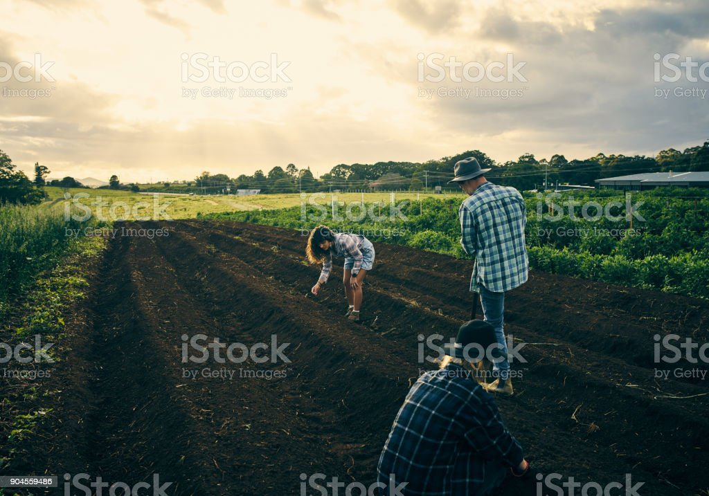 Making the land ready stock photo