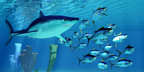 Mako Shark after Yellowfin Tuna stock photo