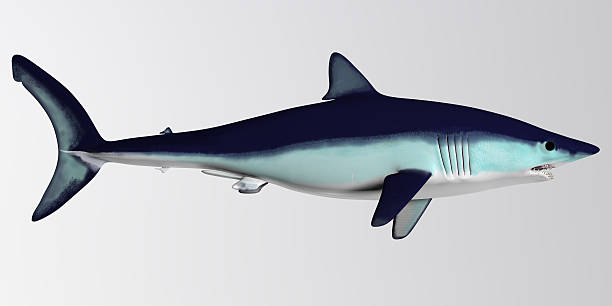 Mako Shark Side Profile stock photo