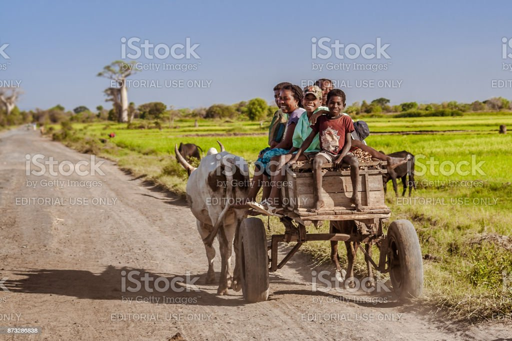Malagasy people in a zebu cart stock photo