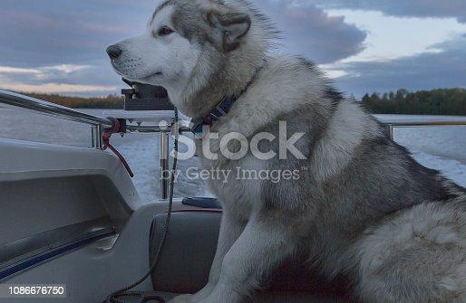 Dog, Animal, Canine, Child, Domestic Animals,