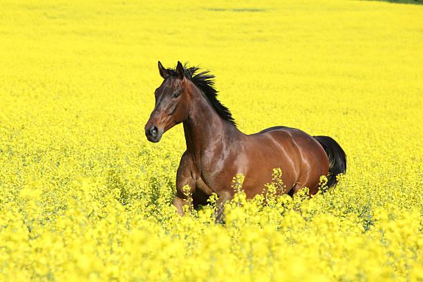 Malapolski horse running picture id158658781?b=1&k=6&m=158658781&s=612x612&w=0&h=ip4vex50xtm9ptaukxp bv18bb3n4gz2i40zmxc4uxu=