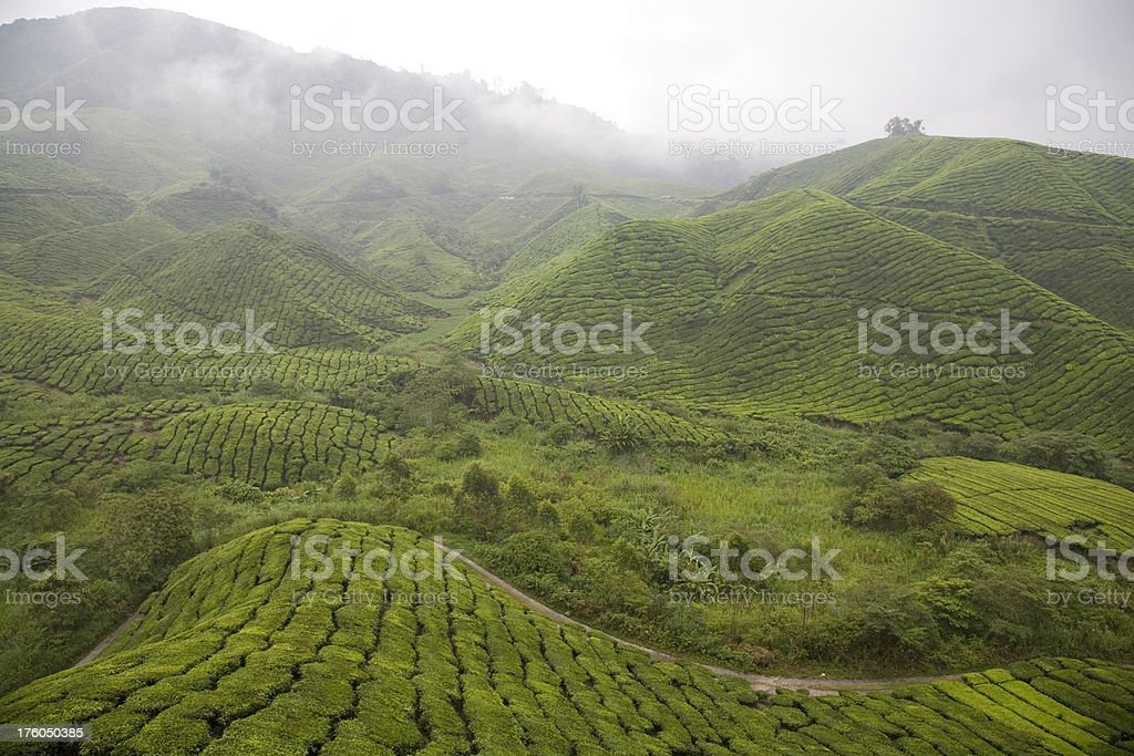 Malaysia, Cameron Highlands. royalty-free stock photo