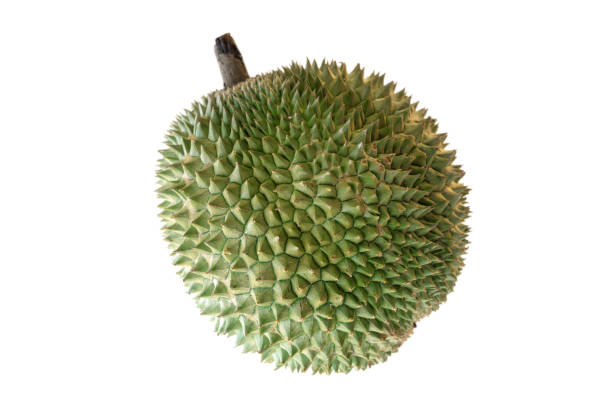 Malaysia famous king of fruits Blackthorn durian Black thorn isolated on white background. stock photo