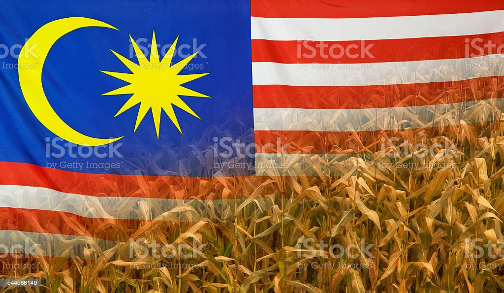 Malaysia Nutrition Concept Corn Field With Fabric Flag Stock