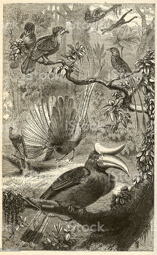 Malaysian wildlife Engrave stock photo