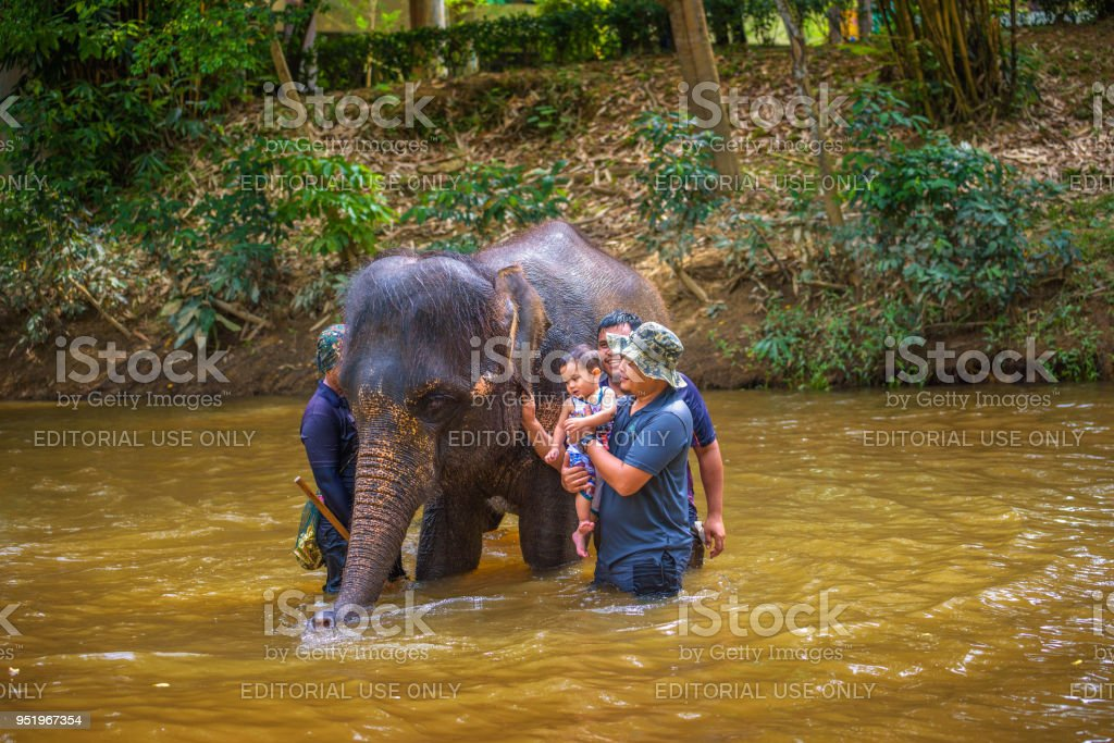 Malaysians Bath With A Baby Elephant Stock Photo & More Pictures of ...