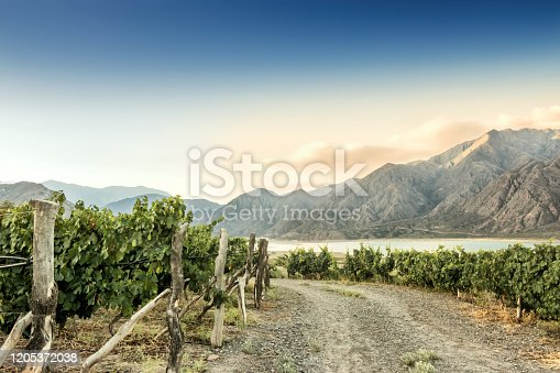 Beautiful Malbec vineyard high in the Andes mountain range. Lujan de Cuyo, Mendoza, Argentina.