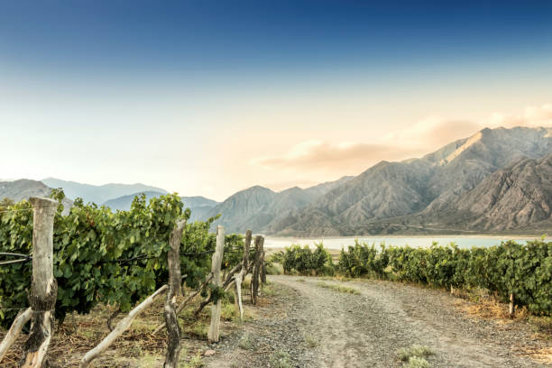 Malbec vineyard at 1380 meters above sea level in the Andes mountain range, Mendoza province, Argentina. stock photo