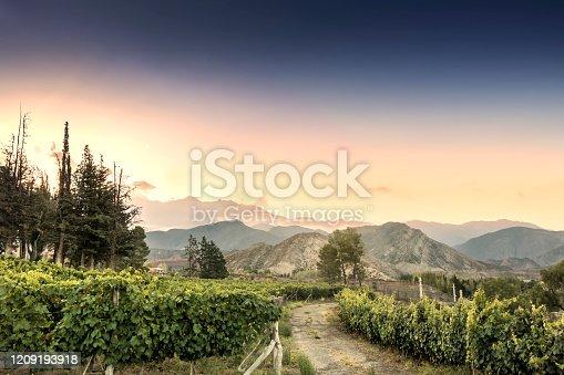 Beautiful Malbec vineyard high in the Andes mountain range. Lujan de Cuyo, Mendoza, Argentina.