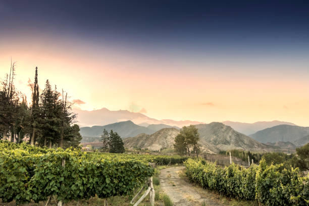 Malbec vineyard in the Andes mountain range, Mendoza province, Argentina. stock photo
