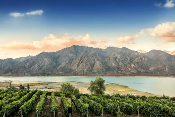 Malbec vineyard in the Andes mountain range, Mendoza province, Argentina. Beautiful Malbec vineyard high in the Andes mountain range. Lujan de Cuyo, Mendoza, Argentina. argentina stock pictures, royalty-free photos & images