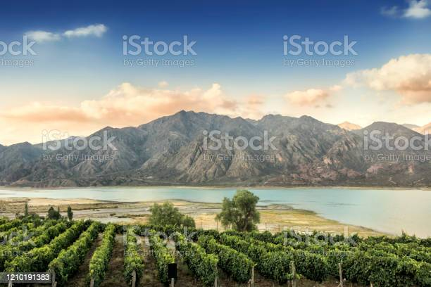 Photo of Malbec vineyard in the Andes mountain range, Mendoza province, Argentina.