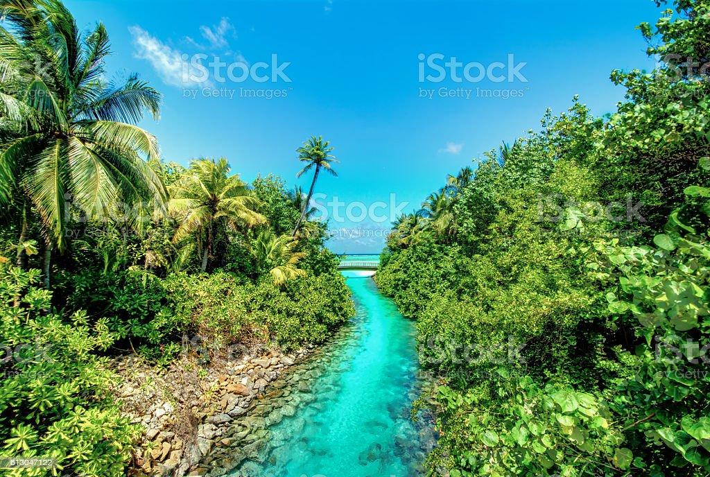 maldives Jungle stock photo
