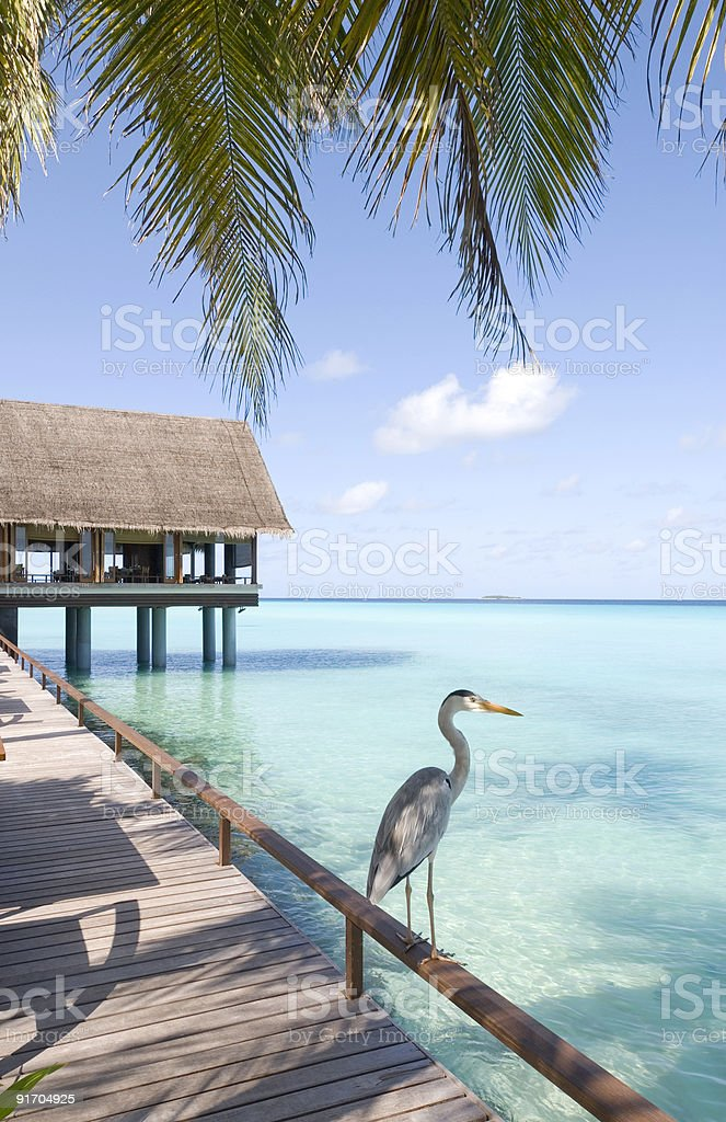 maldives seascape on Reethi Rah island. stock photo