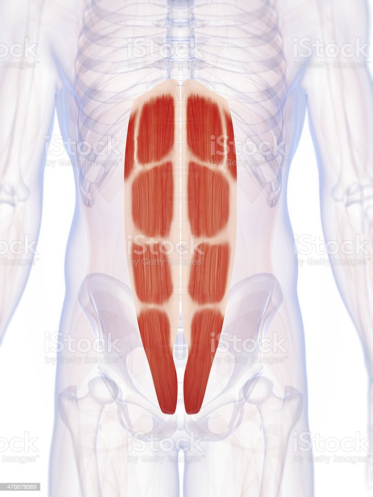 Male Abs Stock Photo More Pictures Of Abdominal Muscle Istock