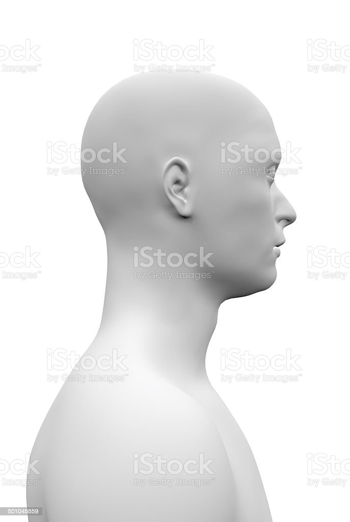 Male anatomical head stock photo
