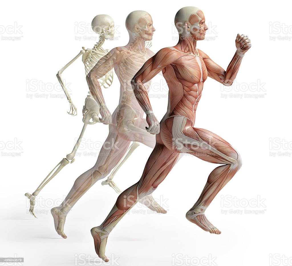 male anatomy running stock photo