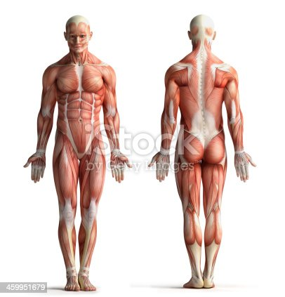 istock male anatomy view 459951679